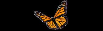 monarch_butterfly_big
