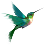 HummingbirdFlight_xlarge